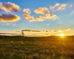 Australian Sun